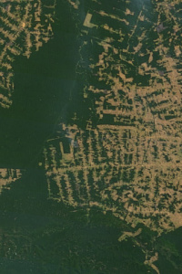 Image: NASA, Deforestation in the state of Rondônia in western Brazil, Wikimedia Commons, Public domain