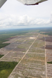 Image: glennhurowitz, Recent deforestation on peatland for palm oil plantation, Flickr, Creative Commons Attribution-NoDerivs 2.0 Generic