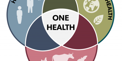 Livestock pathways to 2030: One Health