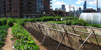Image: Linda, New crops - Chicago urban farm, Wikimedia Commons, Creative Commons Attribution 2.0 Generic