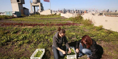 Image: Joe Wolf, A 40,000 s.f. Rooftop Farm in NYC (Photo By Carolyn Cole, Los Angeles Times), Flickr, Creative Commons Attribution-NoDerivs 2.0 Generic