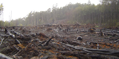 Crustmania, Deforestation, Flickr, Creative Commons – Attribution 2.0 Generic