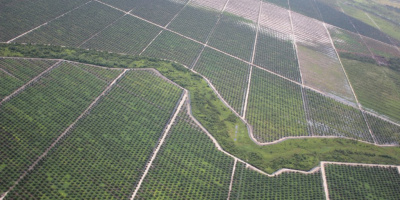 Image: glennhurowitz, Recently planted palm oil plantation on rainforest peatland, Flickr, Creative Commons Attribution-NoDerivs 2.0 Generic