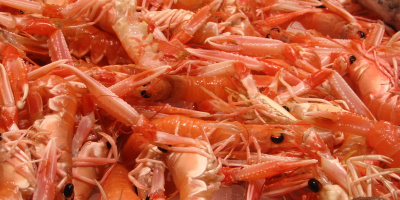 Photo: S Khan, Shrimps, Flickr, Creative Commons License 2.0 generic.