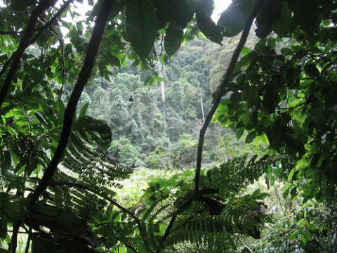 (Photo: Rainforest by Andrés Moreno, Flickr, creative commons licence 2.0)
