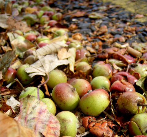 Credit: James Bowe, Apples by the road, Flickr, Creative Commons licence 2.0