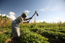 Image: ILRI, Groundnut farmer in Malawi, Flickr, Creative Commons Attribution-ShareAlike 2.0 Generic