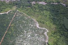 Photo: glennhurowitz, Palm oil plantation encroaching on forest, Flickr, Creative commons licence 2.0