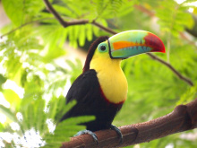 Image: Pxhere, Toucan bird nature, CC0 Public Domain
