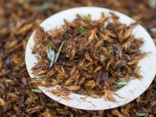 Image: Takeaway, Chingrit thot (Thai script: จิ้งหรีดทอด) are deep-fried crickets. The crickets used in Thailand can be either Gryllus bimaculatus or, as shown in the image, Acheta domesticus, Wikimedia Commons, Creative Commons Attribution-Share Alike 3.0 Unported