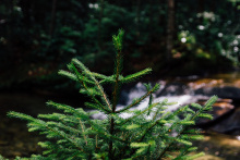 Image: Max Pixel, Shoot Fresh Forest Sprout Young Fir Tree Tree, Creative Commons Zero - CC0 Public Domain