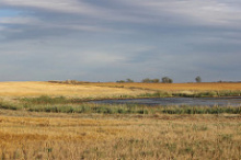 Photo: USFWS Mountain-Prairie, Wetlands in Croplands, Flickr, Creative Commons License 2.0